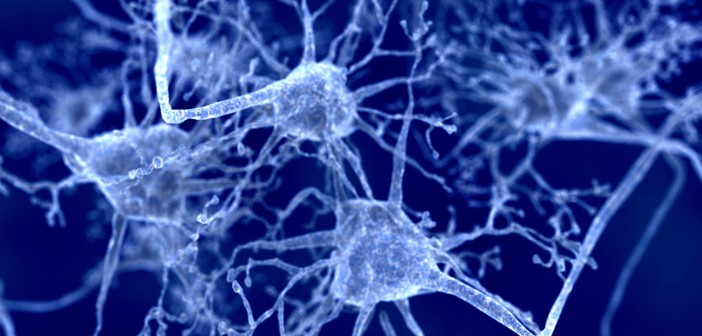 IL4I1 decreases inflammation and promotes CNS repair in models of multiple sclerosis