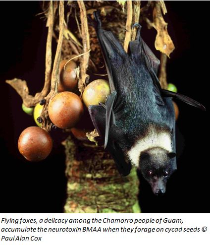 cropped flying fox