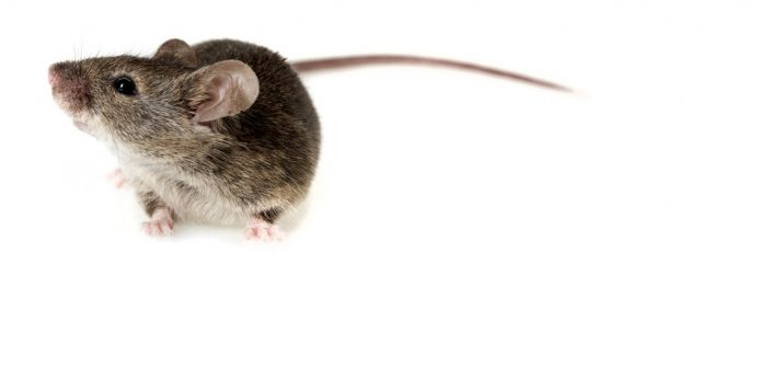 New small-molecule drug may restore brain function in mouse model of Alzheimer's disease