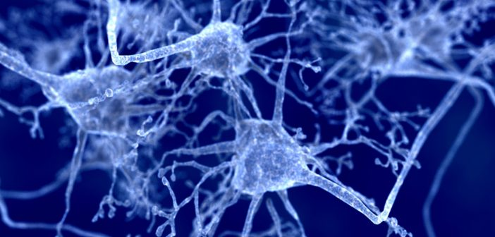 Spinal muscular atrophy may be caused by synaptic abnormalities