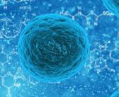 Cerebral organoids and brain development: how do we define cell maturity?