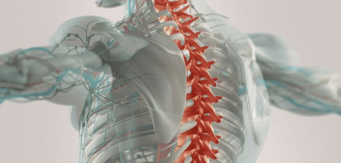This image displays a person holding their arms out with their spinal cord highlighted in orange.