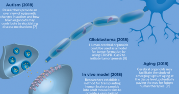 Infographic: Techniques and emerging approaches – cerebral organoids