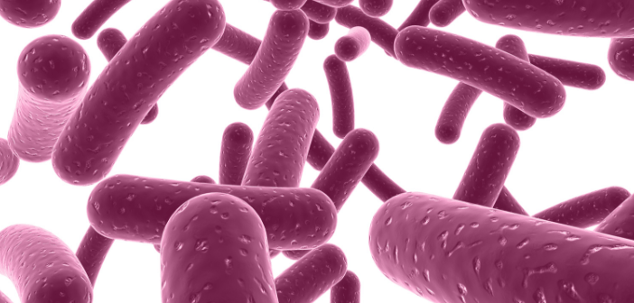 Could Alzheimer's disease be kick-started by periodontal bacteria?