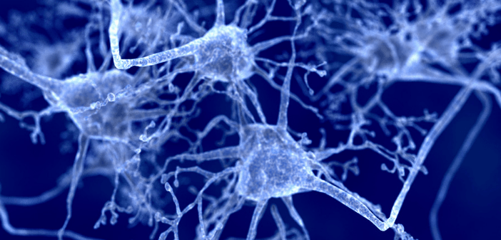 Multiple sclerosis: determining the dynamic nature of oligodendrocyte regeneration