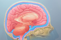 This is an image of the skull and brain, illustrating the underlying structures.