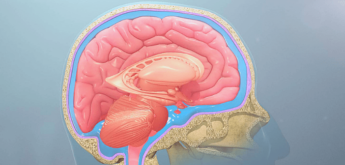 This is an image of the skull and brain.