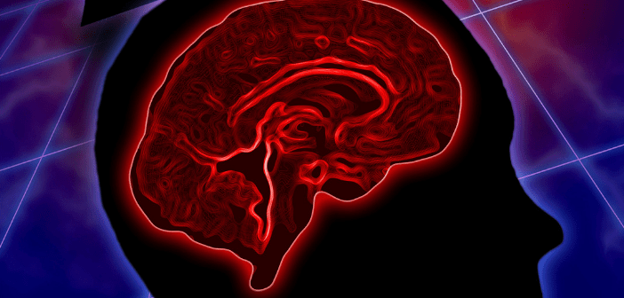 This image is highlighting the brain in red.