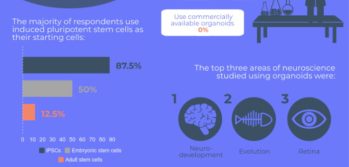 This image is a snippet of an infographic on Neuro Central, which illustrates results obtained from a survey on brain organoids.