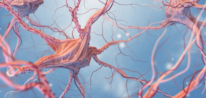 This image displays neurons together in the nervous system.