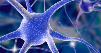 This is an image of a neural circuits view of a single neuron with other neurons in the background.