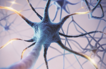 This is an image of neurons illustrating neural networks and connections.