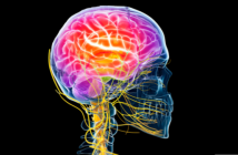 This is an image of the brain highlighted in bright colours with the nerves for the head and neck in yellow.