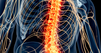 This is an image of the spinal cord that is highlighted within the outline of a body.