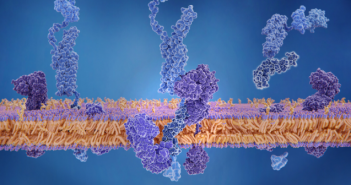 This is an image of APP being cleaved by gamma and beta secretase and releasing the beta-amyloid peptide.