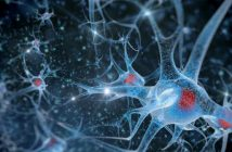 Concussion could alter transmission of information within the brain