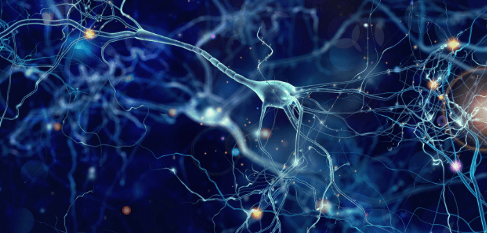 This is an image of neurons on a dark blue background.