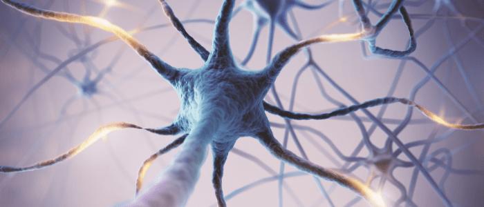 Synapse degeneration